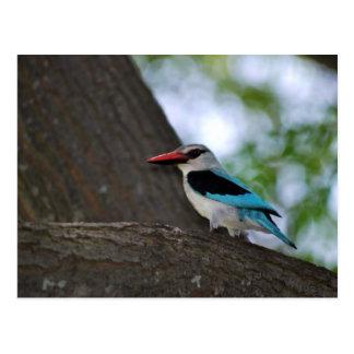 Malachite Kingfisher Postcard