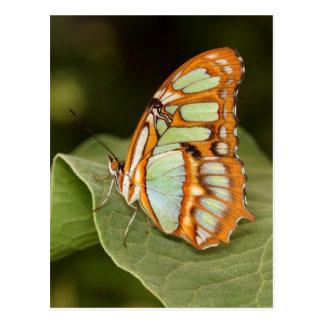 Malachite perched on a leaf postcard