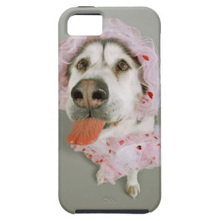 Malamute Dog Wearing a Tutu and Sticking Out Tough iPhone 5 Case