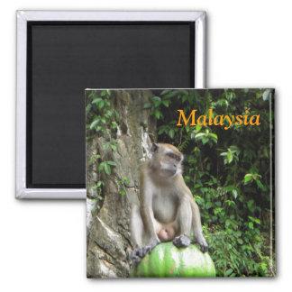 Malaysian Monkey Magnet