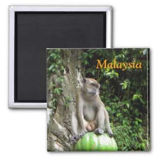 Malaysian Monkey Square Magnet