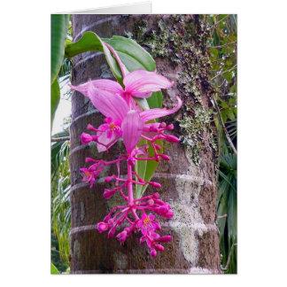 Malaysian Orchid Tree Card