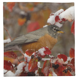 Male American Robin in Black Hawthorn Napkin