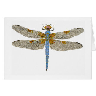 Male Bleached Skimmer Dragonfly Card