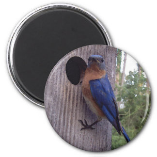Male Bluebird Magnet