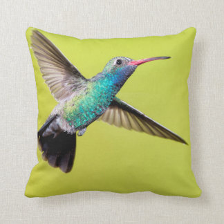 Male broad-billed hummingbird in flight cushion