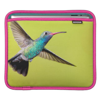 Male broad-billed hummingbird in flight sleeve for iPads