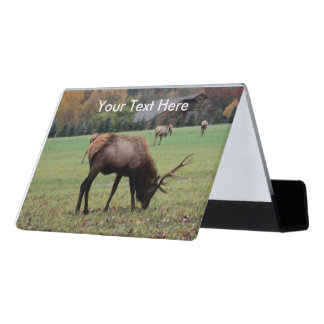 Male Brown Elk Antlers in Grassy Field Barn Photo Desk Business Card Holder