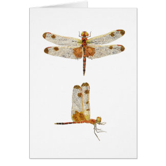 Male Calico Pennant Dragonfly- 2 views Card