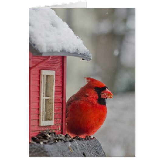 Male Cardinal at feeder in snow Card