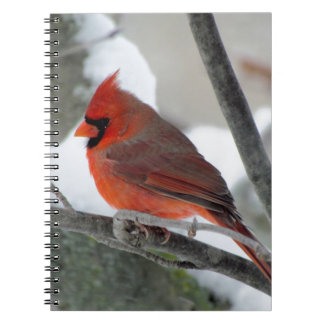 Male cardinal in the winter notebook