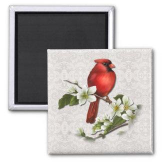 Male Cardinal on Dogwood Magnet