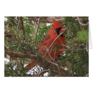 Male Cardinal, Wonderful Day Greeting Card