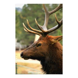 Male Elk Art Photo
