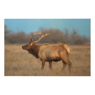 Male elk profile in autumn wood print