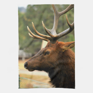 Male Elk Tea Towel