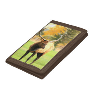 Male Elk With Tongue Out Tri-fold Wallet
