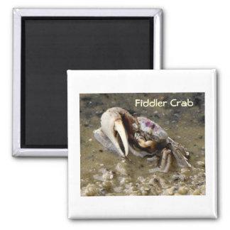 Male Fiddler Crab Magnet