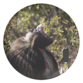 Male gelada baboon (Theropithecus gelada) Plate
