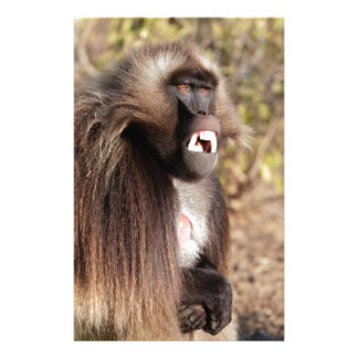 Male gelada baboon (Theropithecus gelada) Stationery