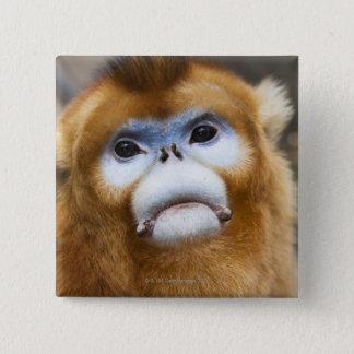 Male Golden Monkey Pygathrix roxellana, portrait 15 Cm Square Badge