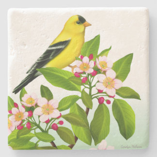 Male Goldfinch in Apple Tree Blossoms Coaster
