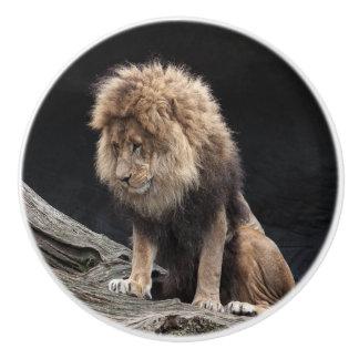 Male lion ceramic knob