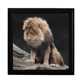 Male lion gift box
