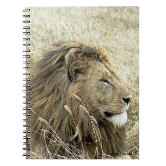 Male Lion Journal