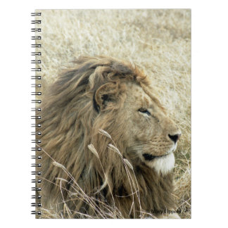 Male Lion Journal Spiral Note Book