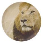 Male lion (Panthera leo) portrait, Masai Mara, Plate