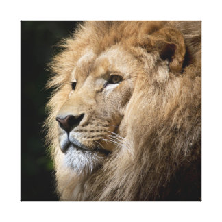 Male lion portrait on black background canvas print