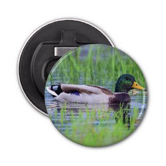 Male mallard duck floating on the water bottle opener