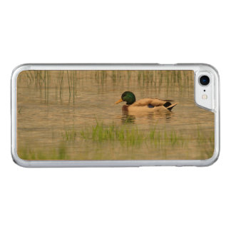 Male mallard duck floating on the water carved iPhone 8/7 case