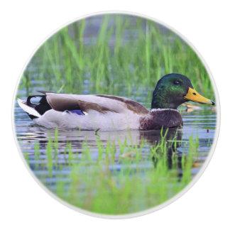 Male mallard duck floating on the water ceramic knob