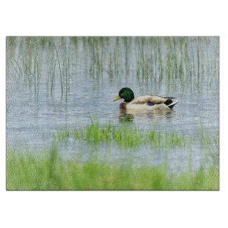 Male mallard duck floating on the water cutting board