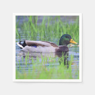 Male mallard duck floating on the water disposable napkin