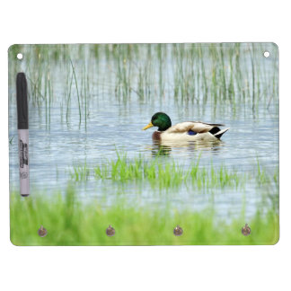 Male mallard duck floating on the water dry erase board with key ring holder