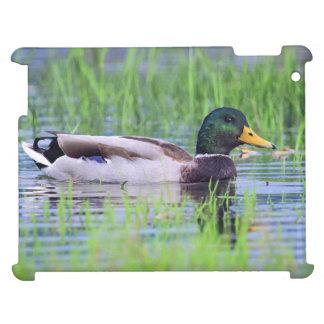 Male mallard duck floating on the water iPad case