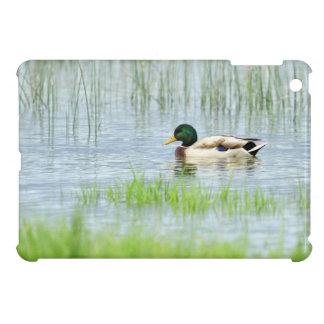Male mallard duck floating on the water iPad mini cover