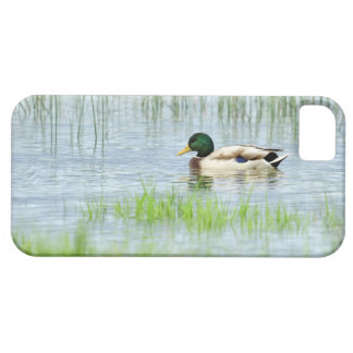 Male mallard duck floating on the water iPhone 5 case