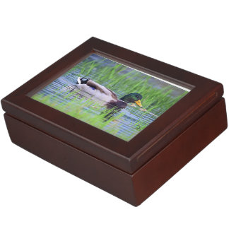 Male mallard duck floating on the water memory box