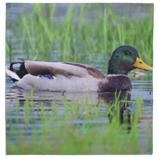 Male mallard duck floating on the water napkin