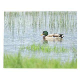 Male mallard duck floating on the water notepad