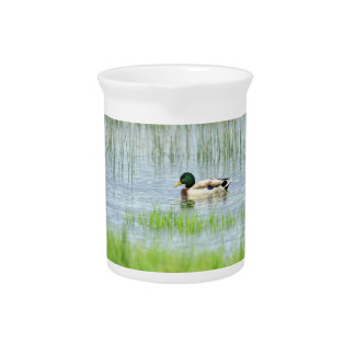 Male mallard duck floating on the water pitcher