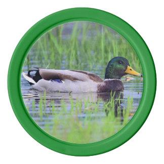 Male mallard duck floating on the water poker chips