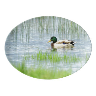 Male mallard duck floating on the water porcelain serving platter