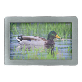 Male mallard duck floating on the water rectangular belt buckle
