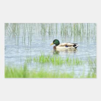 Male mallard duck floating on the water rectangular sticker