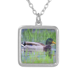 Male mallard duck floating on the water silver plated necklace